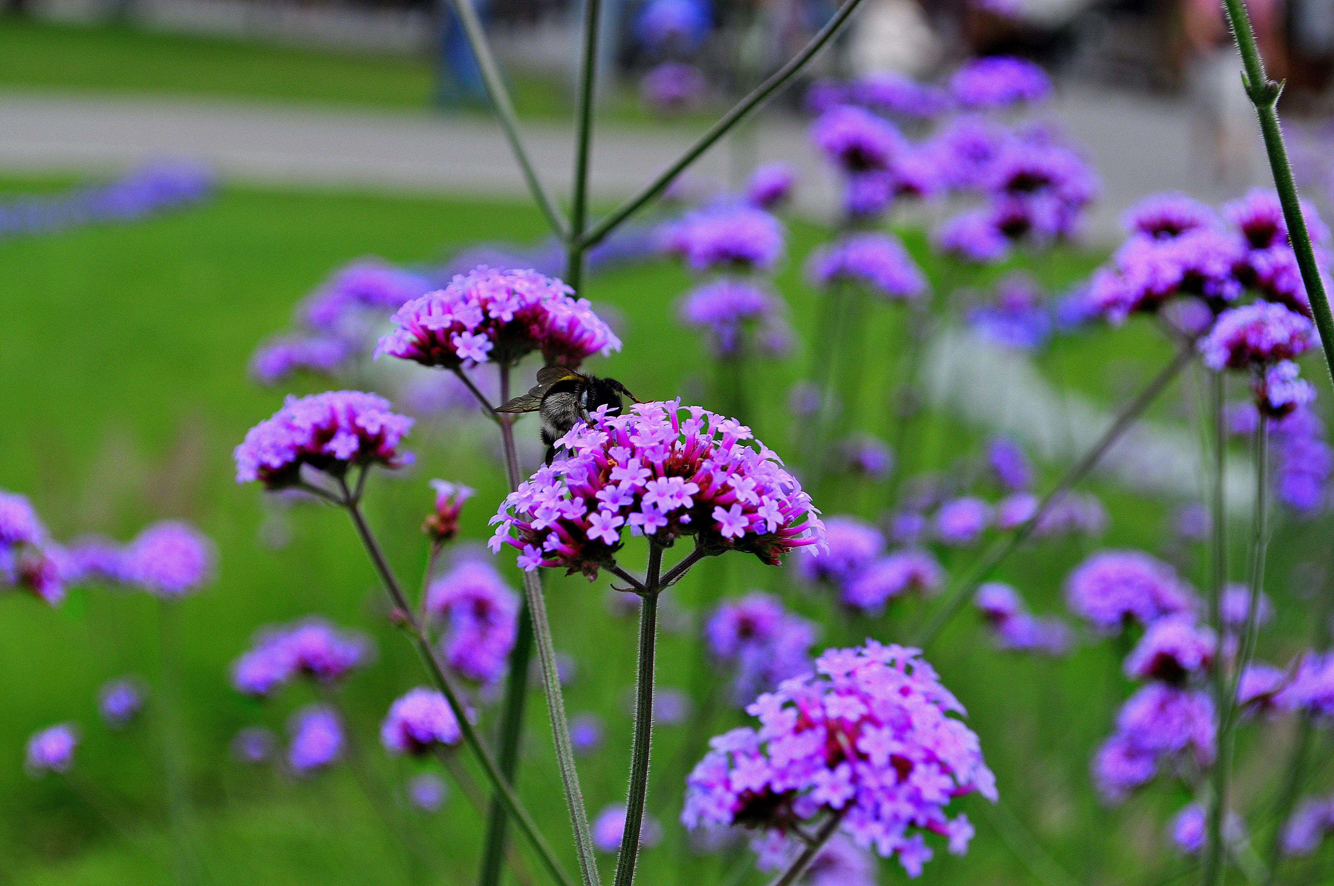 Flowers in Riga, Latvia