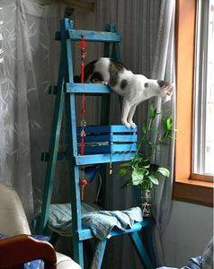 arbre a chat avec echelle