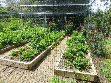 Fruit Cages | Vegetable Cages | Crop Protection | Auckland NZ