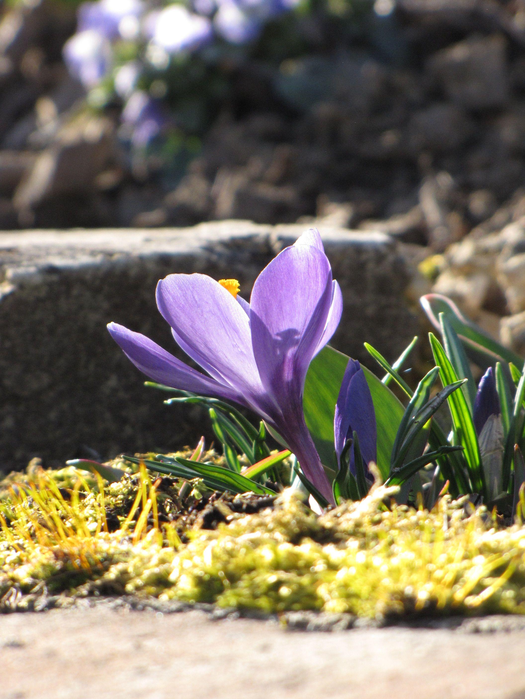 Paradiesgarten Maag. #Frühjahr