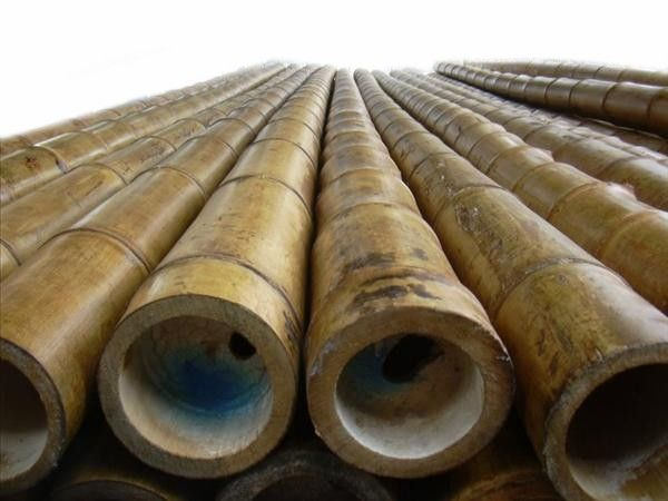 Guadua Angustifolia Branded Giant Timber Bamboo Is Recognized As One Of The Strongest Species Available Bamboo Poles Bamboo Species Bamboo Poles For Sale