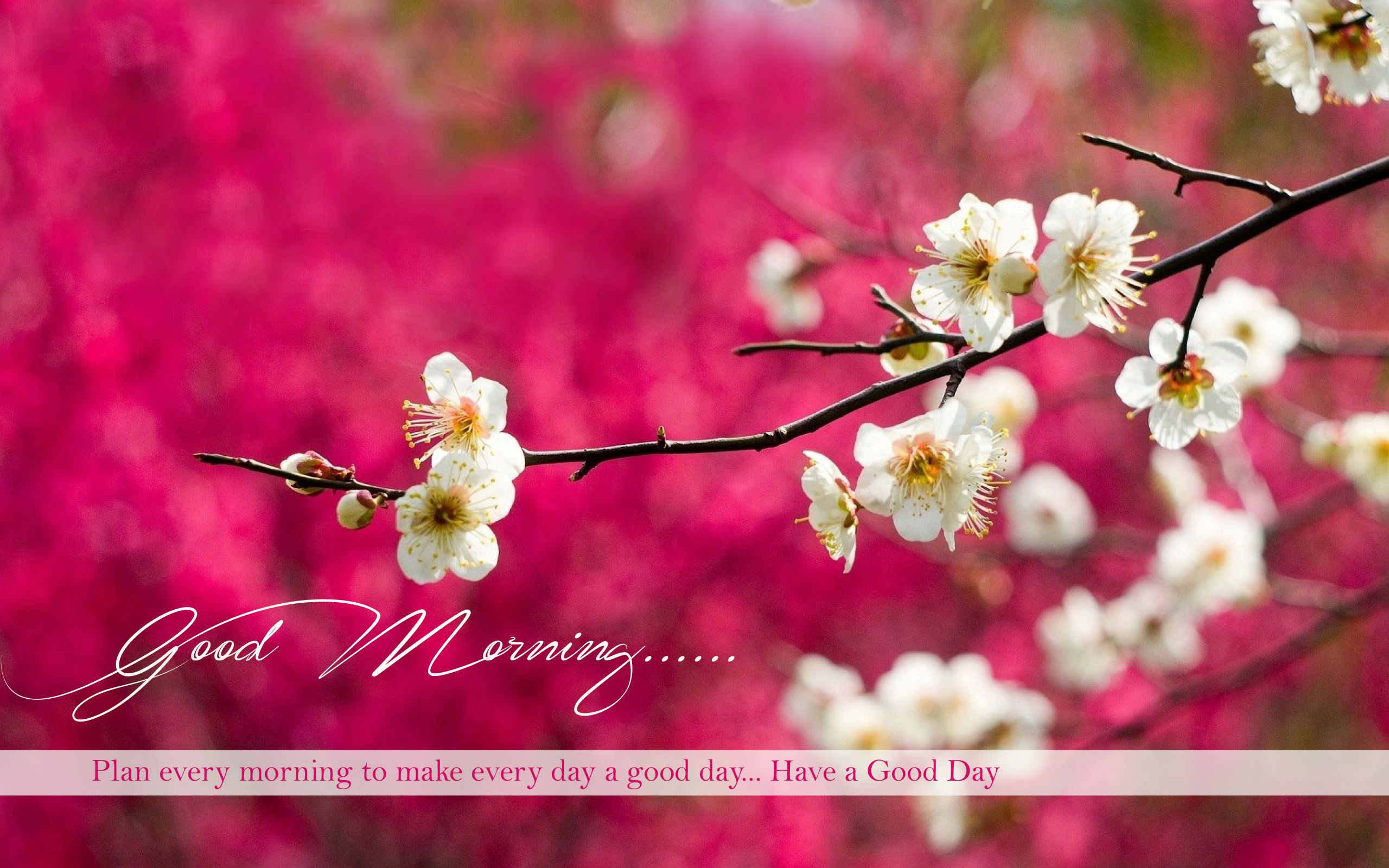 Good Morning wishes pictures for friends morning pics