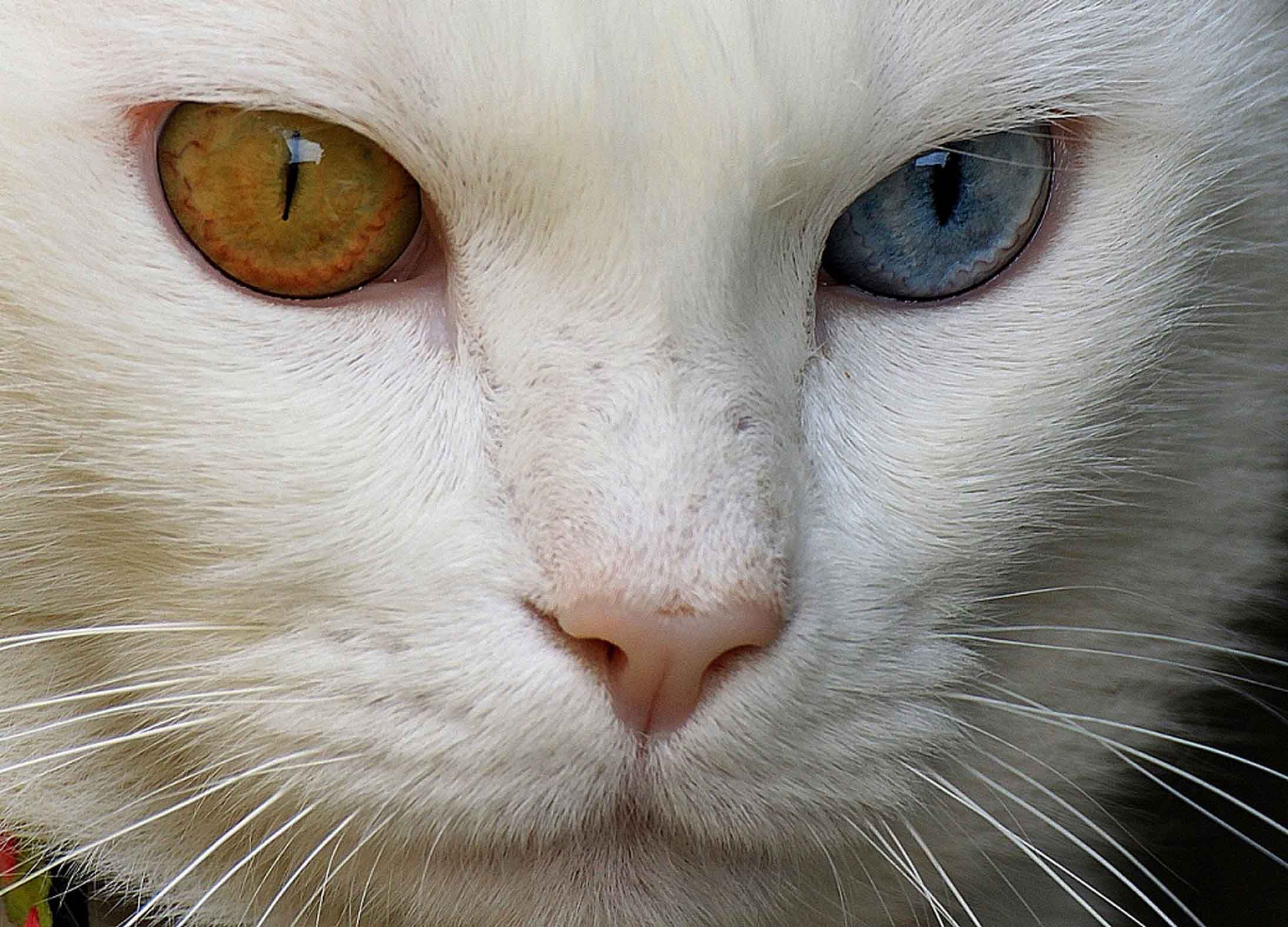 Pin By Savannah Harris On E Y E S Cat Colors White Cats Cats
