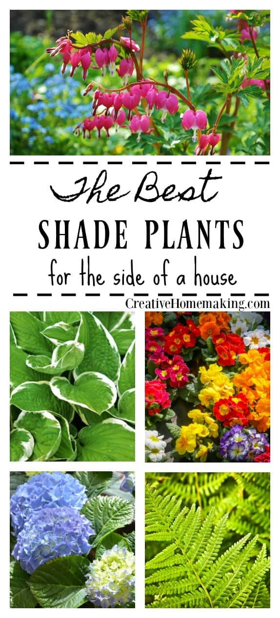 The Best Shade Plants For A Shady Side