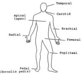 7 Pulse Points of the Body: Pulse Rate Self Diagnosis