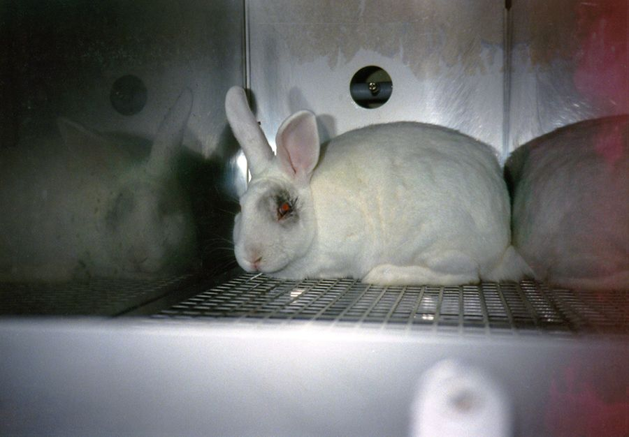an introduction to the cruelty and injustice of animal experiments If you have figures to show how many animals are killed for the sake of medical research, for example, this would be the place to document that type of animal abuse.