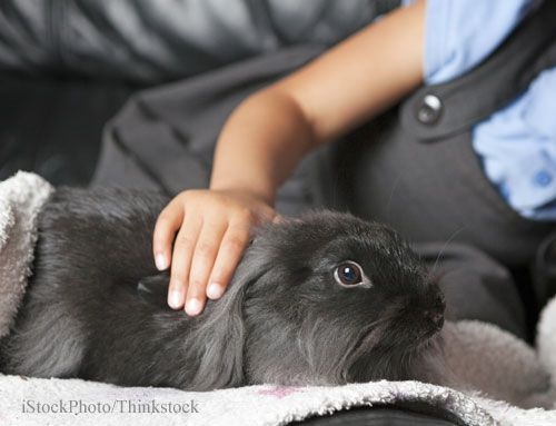 Study Finds Autistic Children May Benefit From Pets
