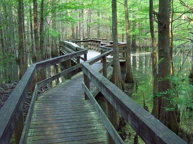 The bayou of Louisiana