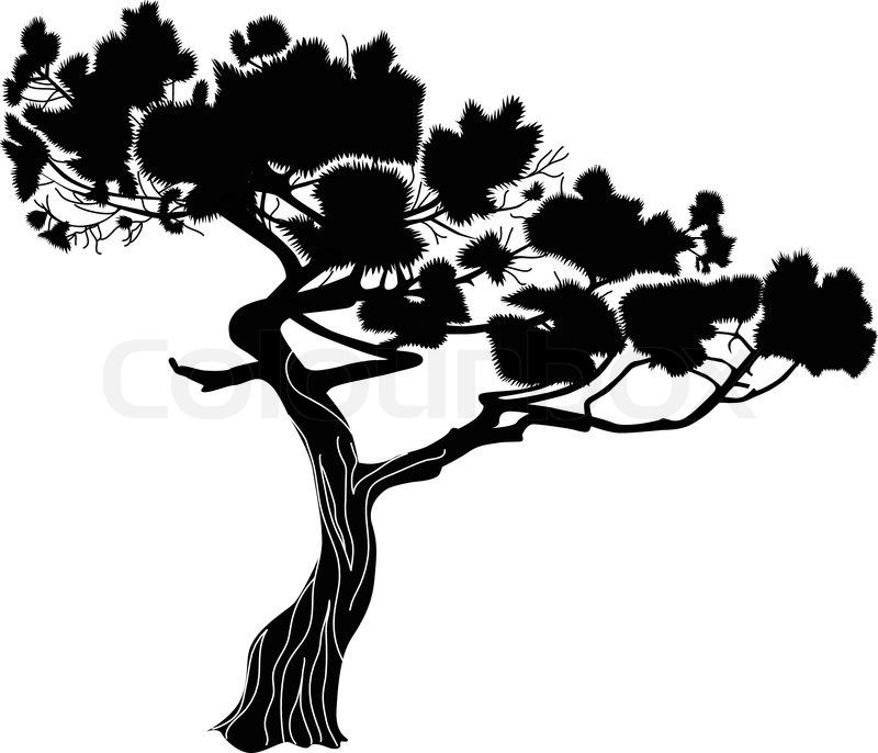 cypress tree silhouette cypress tree silhouette vector of fur a rh pinterest co uk cypress tree vector free bald cypress tree vector