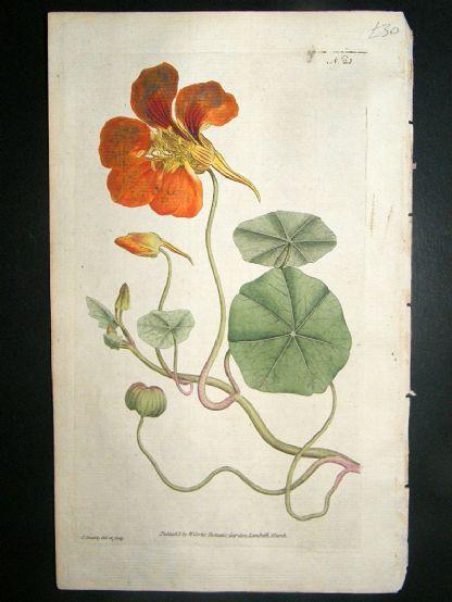 Botanical Print 1787 Greater Indian Cress or Nasturtium #23, Curtis hand col'   Albion Prints