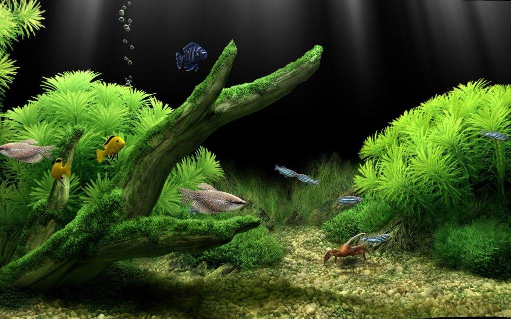 Plants Fishes Like Google Search Aquarium Background Aquarium Wallpaper Aquarium Aquarium background hd wallpaper