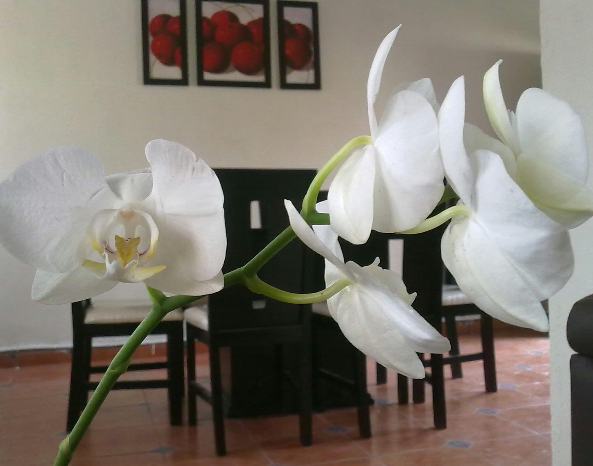 Orchids Orquideas