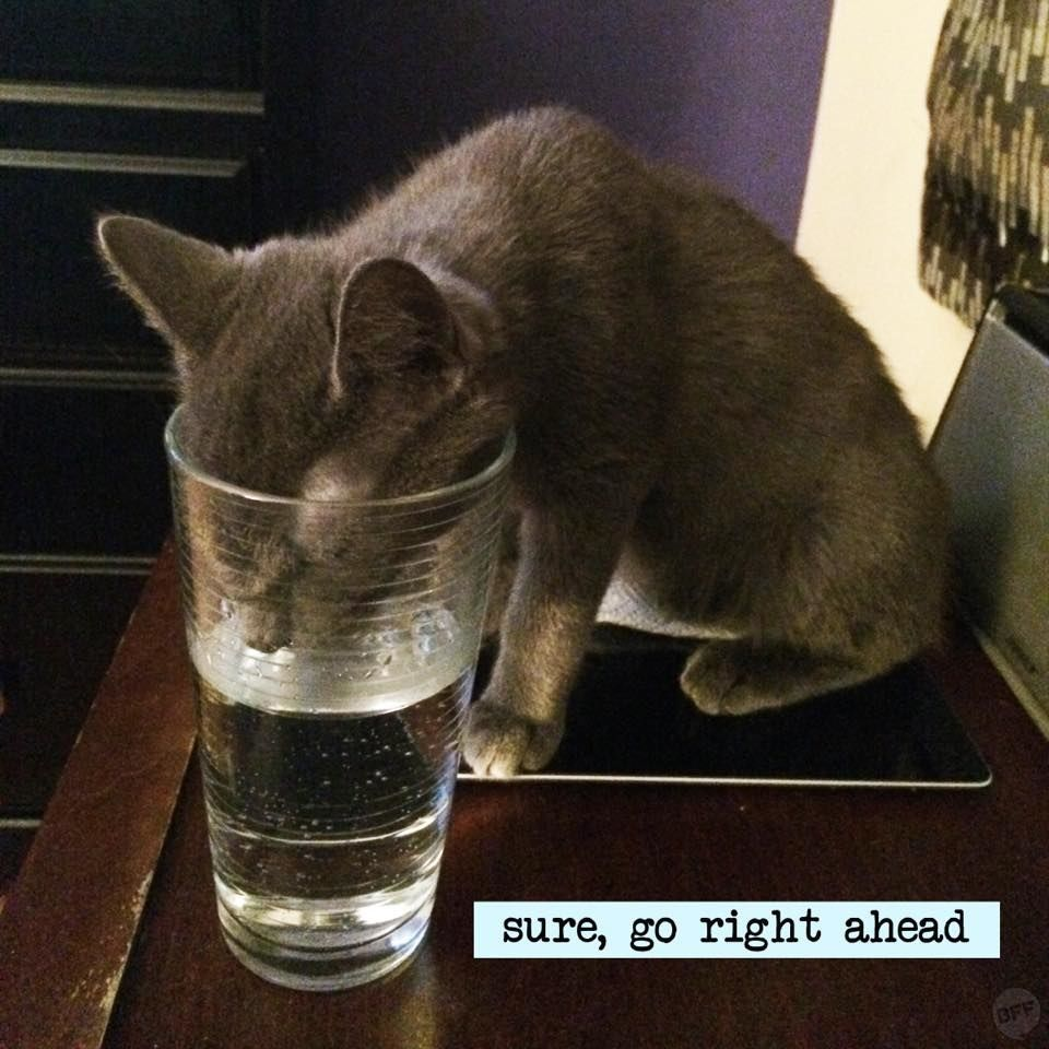 Drinking fountains in reality Buy a cat, Cat has fleas