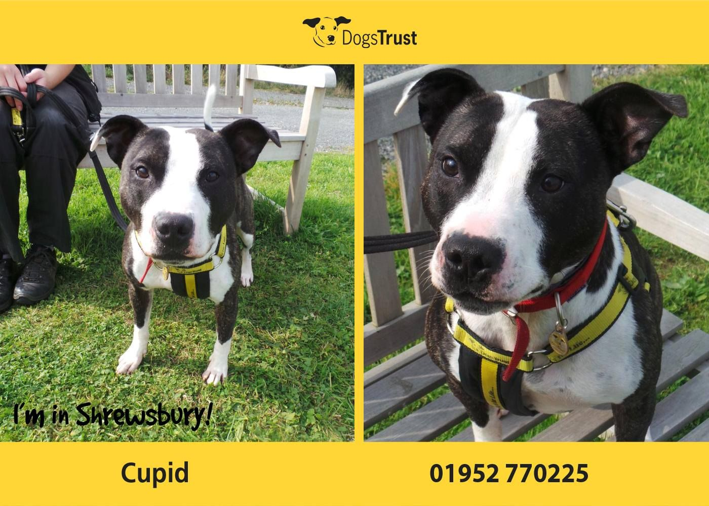 Cupid Here Is A Very Worried Chap From Dogs Trust Shrewsbury Who Loves Going Out For Nice Walks And Playing With His Toys Dogs Trust Dog Adoption Dogs