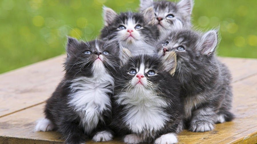 Buscando al compañero perfecto | Mascotas