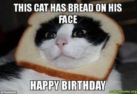 Funny Cat Birthday Meme : Witty cat happy birthday meme happybirthday girl scout