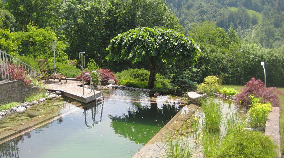 Schwimmteich Hang Garten Google Suche Schwimmteich Garten Am Hang Garten