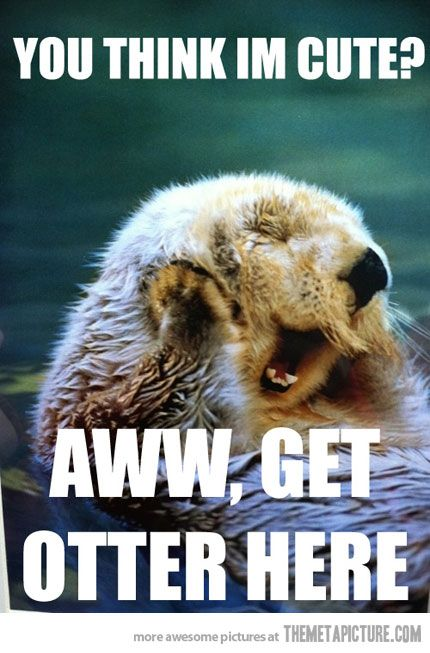 1e9d71e6dd2eff4fa9e89acda2d860c1 you're making me blush pinterest otters, animal and humor
