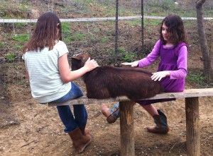 """Many years ago one of these children would have run from the animals. Now """"helicopter"""" mom can stand back and the child makes her own, now wise and safe, choices without interference. http://educational-strategies.com/helicopter-parent/"""