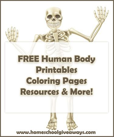 FREE human anatomy printables you may enjoy coloring pages