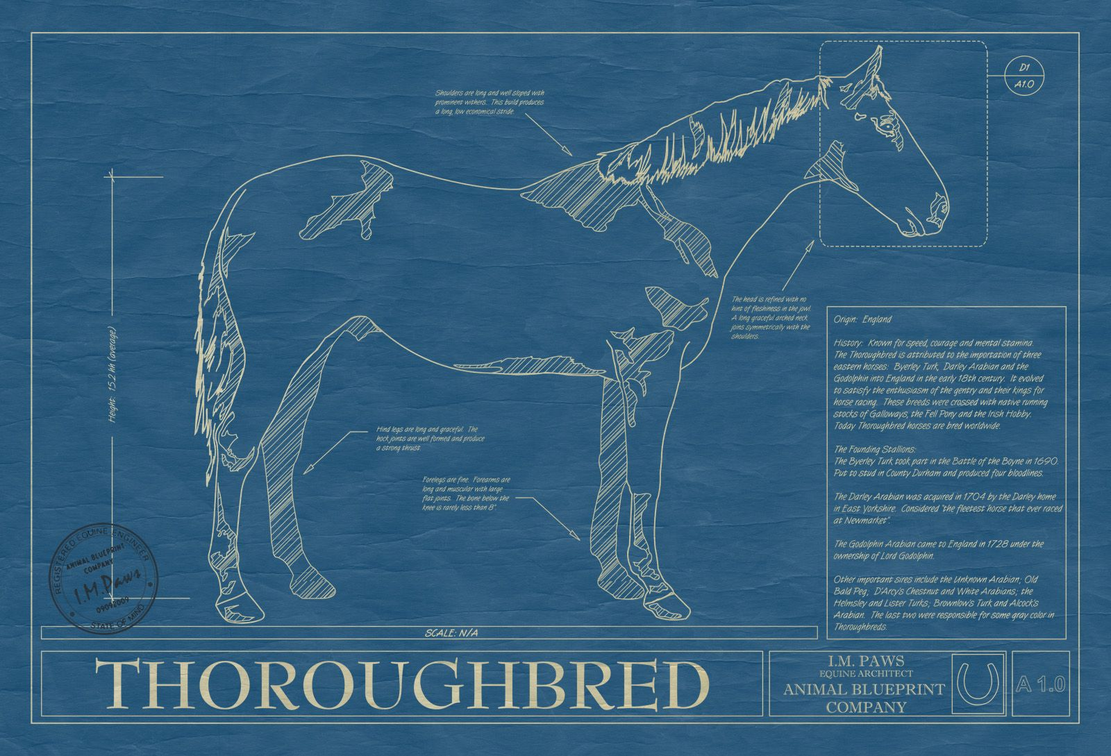 Animal Blueprint Company- Thoroughbred Horse Print