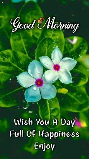 Beautiful Creative Good Morning Wishing Video