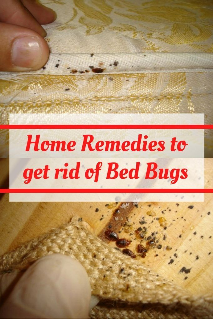 9 Best Remedies to Get Rid of Bed Bugs Naturally HEALTHY