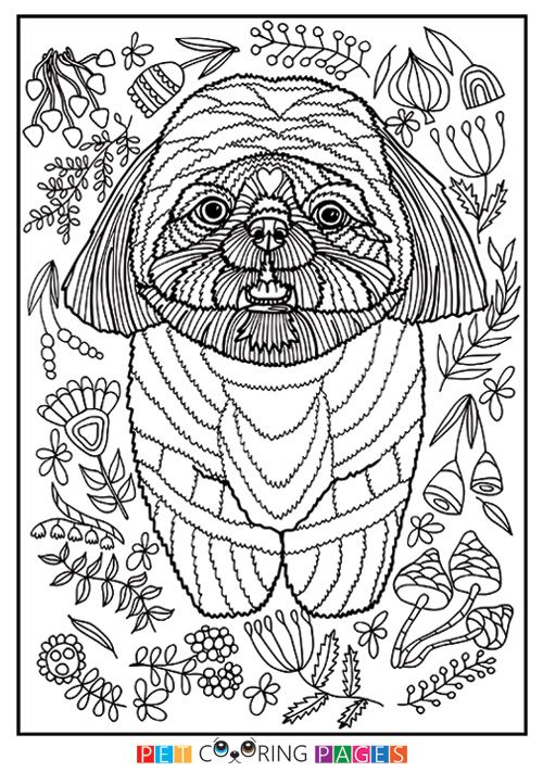 free printable shih tzu coloring page available for download simple and detailed versions for adults - Shih Tzu Coloring Pages