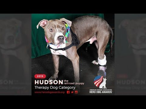 Hudson The Railroad Puppy Therapy Dog Working With Plastics Make