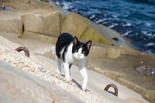 Curious cat by the sea   Flickr - Photo Sharing!