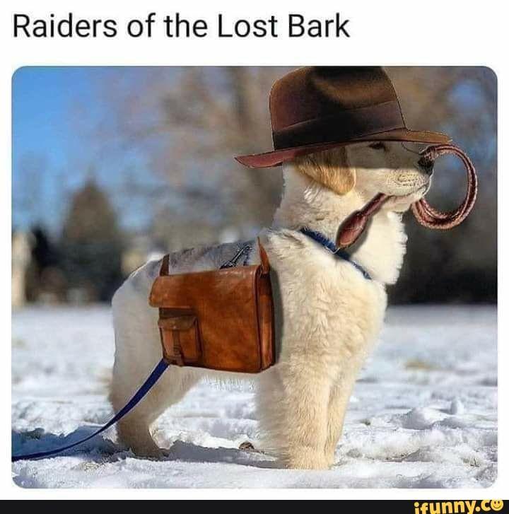 Raiders of the Lost Bark – iFunny :)