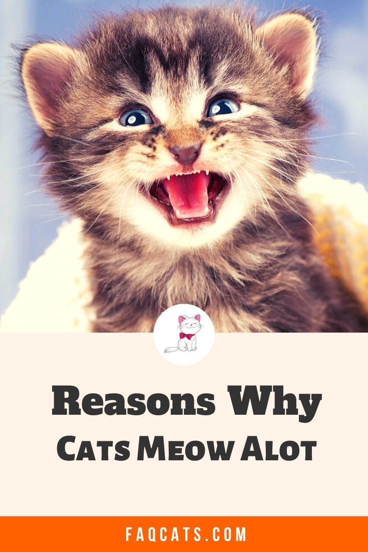 Pin on Cat Life Hacks And Tips