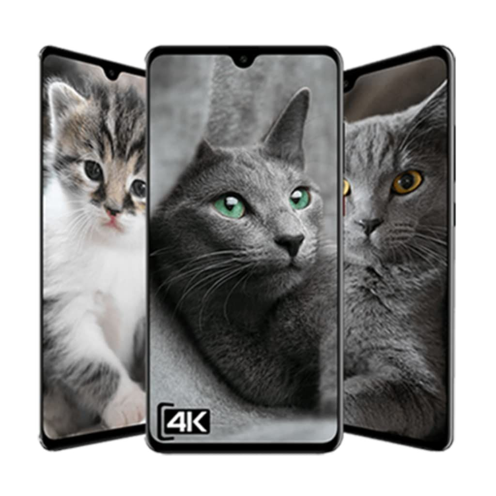 Cat Hd Wallpaper En 2020 Android Tablette Android