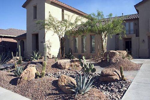desert plant front yard