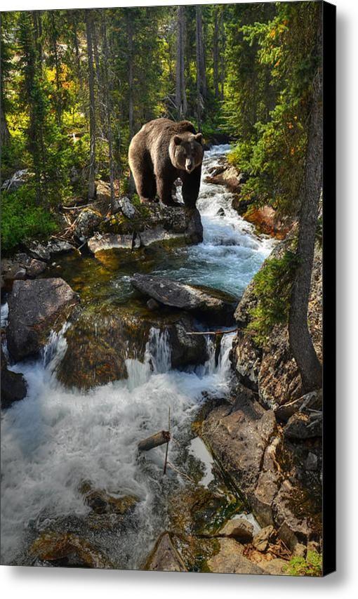Bear Necessity Canvas Print / Canvas Art By Ken Smith