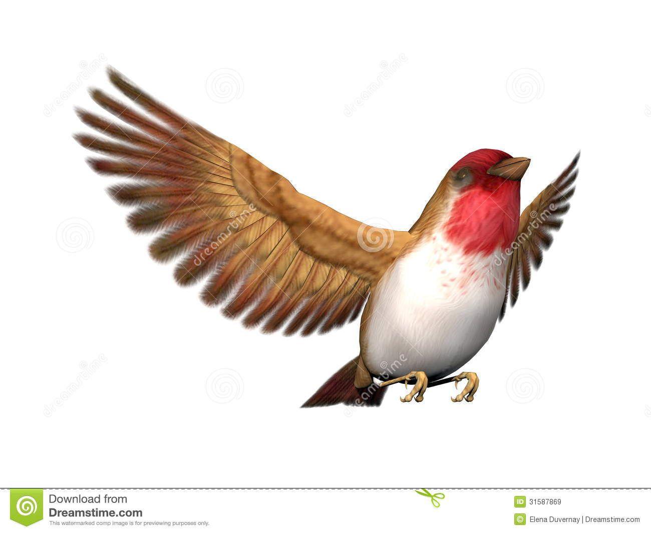 scarlett-finch-bird-d-render-flying-open-wings-white-background-31587869.jpg 1300 × 1065 bildepunkter