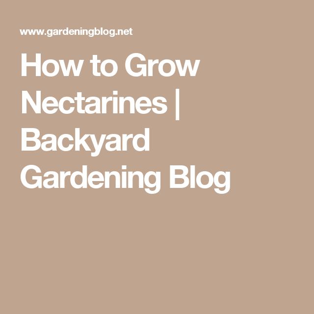 Superbe How To Grow Nectarines | Backyard Gardening Blog