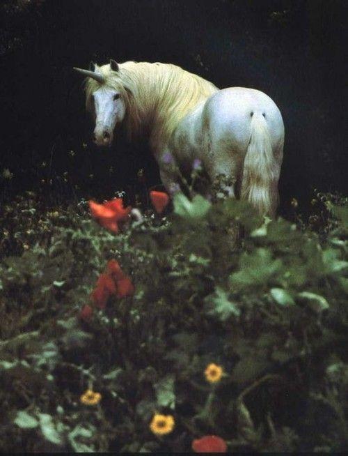 Unicorn Bilder Mystische Wesen Pferdekunst