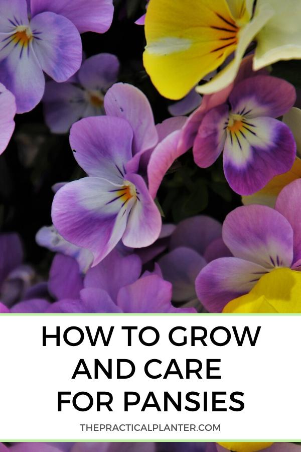 Pin On Gardening Tips Tricks