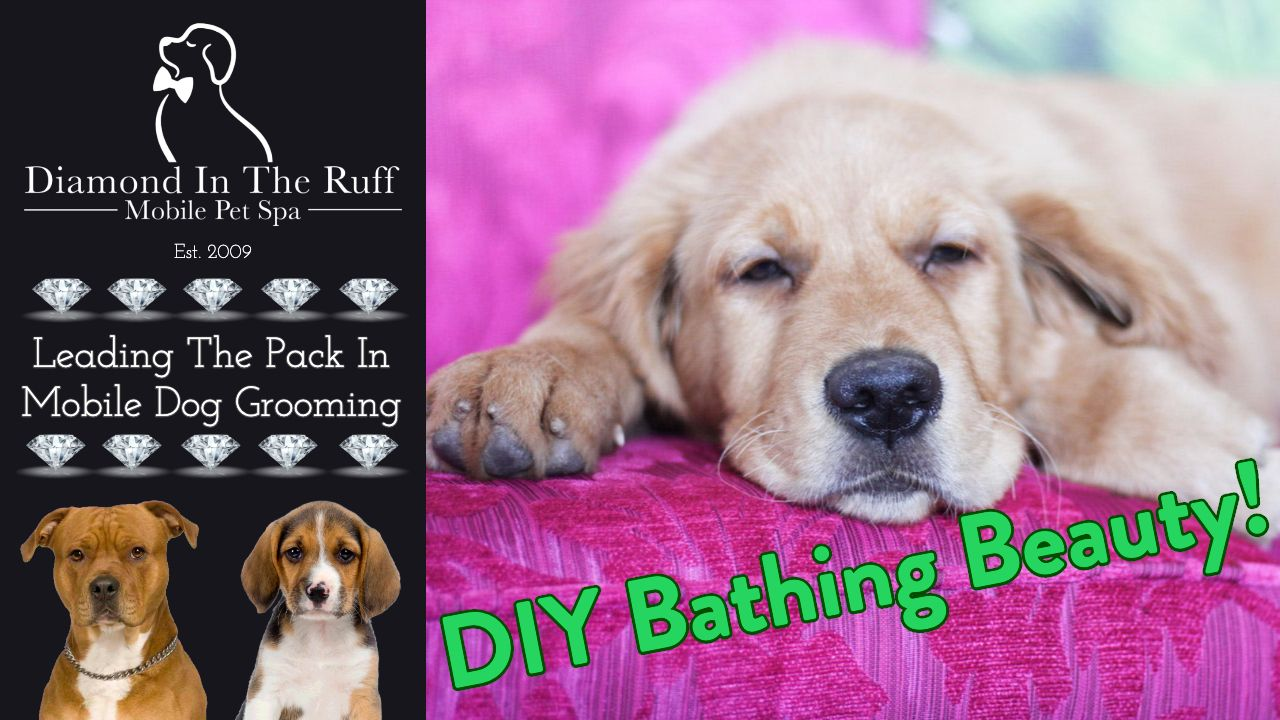 How To Make A Diy Recirculating Bathing System Diamond In The