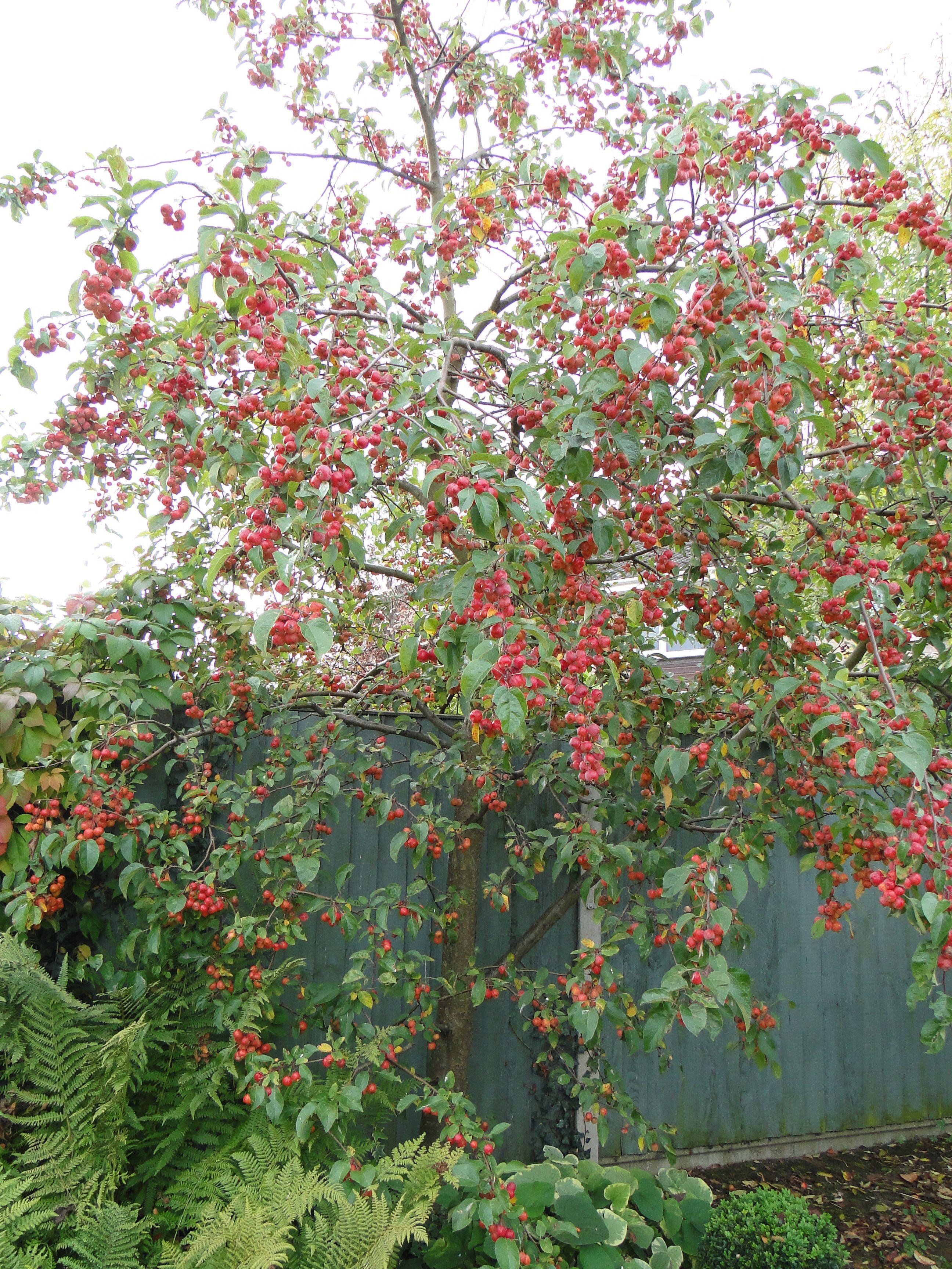 The Year of the Tree - My Crab Apple | Big garden, Garden ...