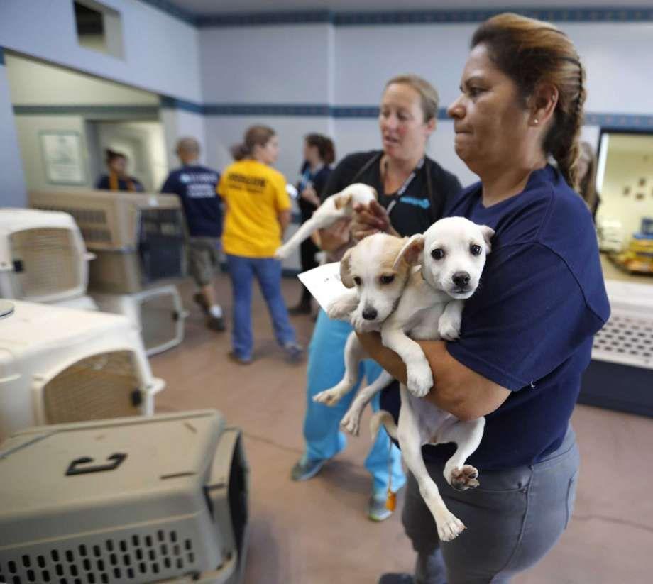 Houston Spca Adoptable Pets Are Headed To Atlanta To Make Room For Harvey Pets Dog Adoption Humane Society Animal Stories