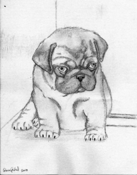 Little Pug Pencil Sketch By Pascalunaoriginals On Deviantart