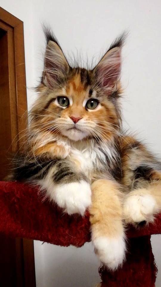 Pin Von Elke Kramer Auf Bilder Katzen Tiere Baby Katzen