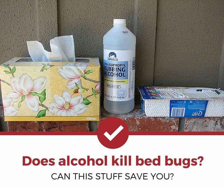 Does Rubbing Alcohol Kill Bed Bugs Pestcontrolservices