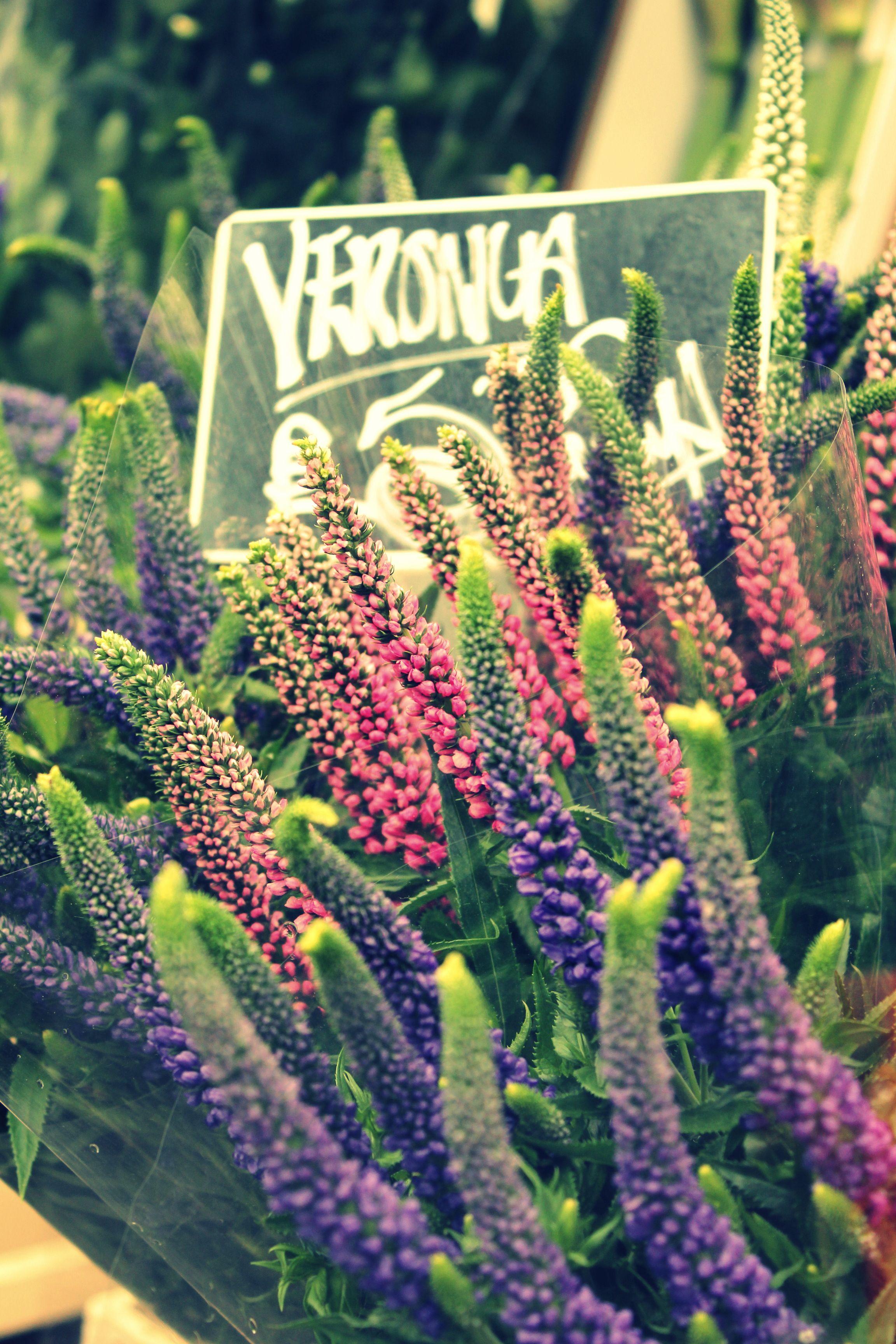 Veronica Flower - Columbia Road Flower Market, London http://martkiee.com/columbia-road-flower-market/