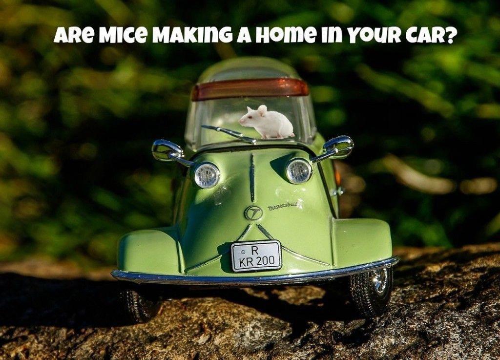 1ea2aa06899b547f15670d8306162bc4 - How To Get Rid Of Mice In Car Hood
