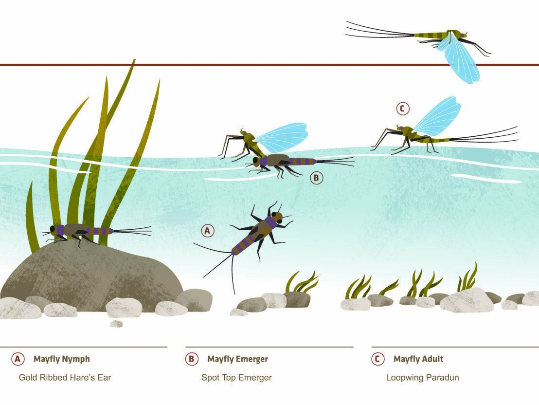 Mayfly hatch fly fishing how to pinterest mayfly for Hatch fly fishing