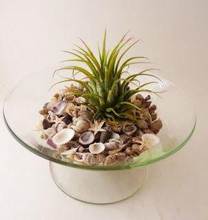 sea shells and succulent plants
