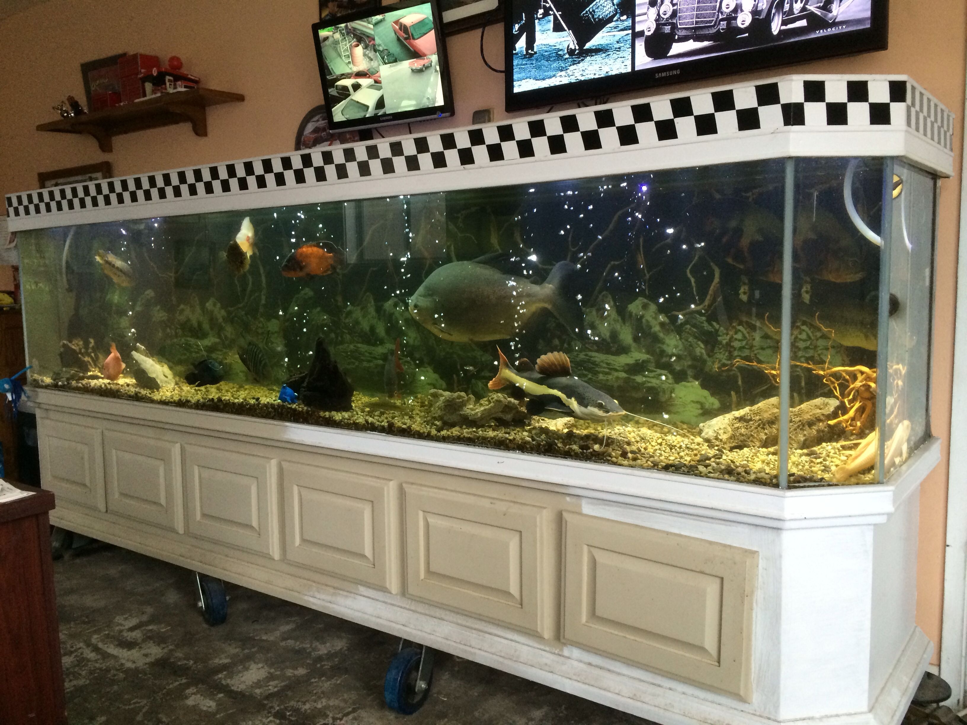 My Personal Fish Tank With Images Fish Tank Aquarium Fish